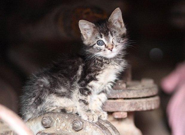 Все о братьях наших меньших: Стих о бездомном котенке ...