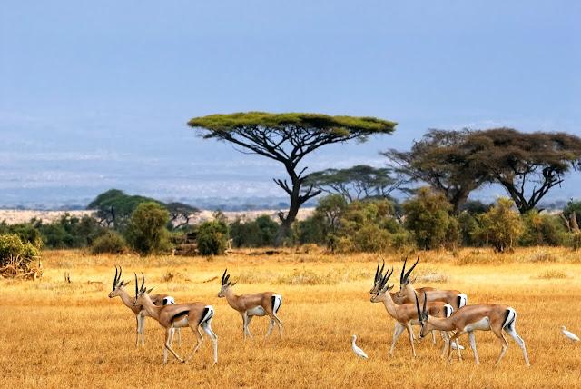 Puncak Hari Konservasi Alam Nasional dipusatkan di Taman Nasional Baluran