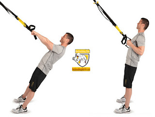 Suspension Trainer Curl