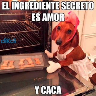 Imagenes Graciosas Chistosas Memes de perros