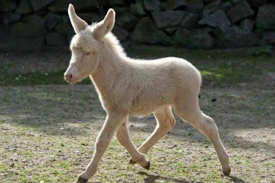 Donkey- patience & perseverance