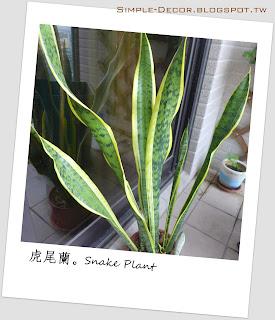 http://simple-decor.blogspot.com/2017/06/greeny-garden-snake-plant.html