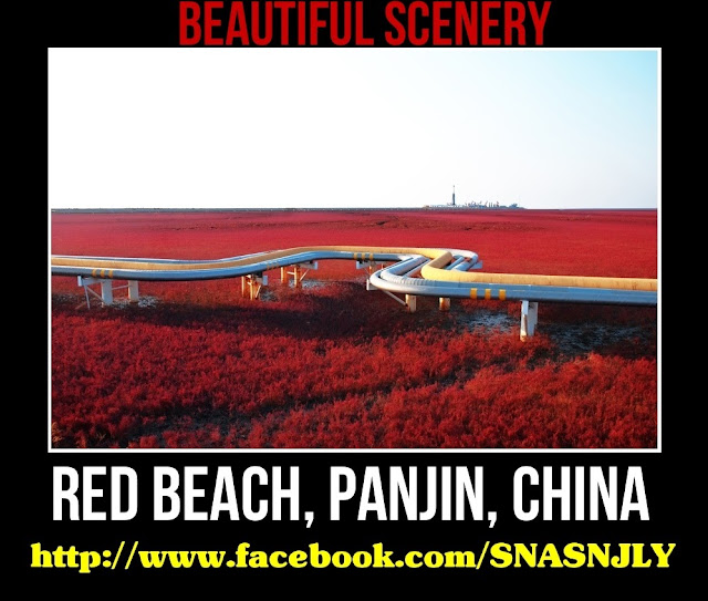 Red Beach, Panjin, China,Beautiful scenery