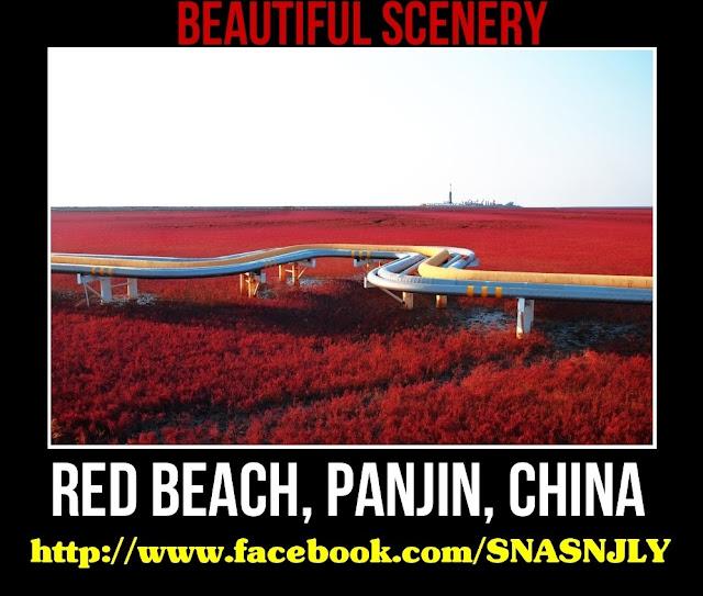 Red Beach, Panjin, China,Beautiful scenery