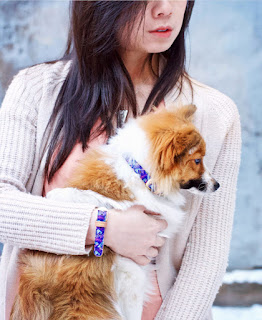 mascotas, manualidades, diys, gatos, perros