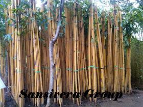 Petani Bambu Panda Kuning