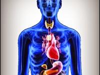 Sistem Endokrin (Hormon) Pada Manusia – Materi Biologi Kelas XI IPA SMA-MA