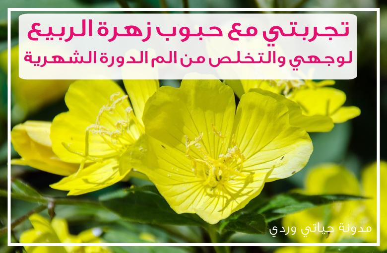 حبوب زهرة الربيع