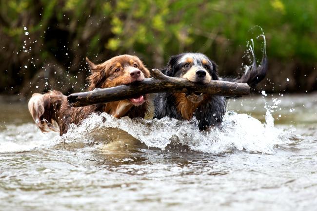 Zabawki pływające dla psów