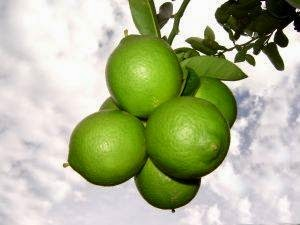 //indonesian-herbal-medicine.blogspot.com/2014/11/lime-for-home-remedies.html