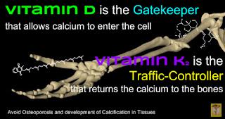 vitamin D is the gateKeeper