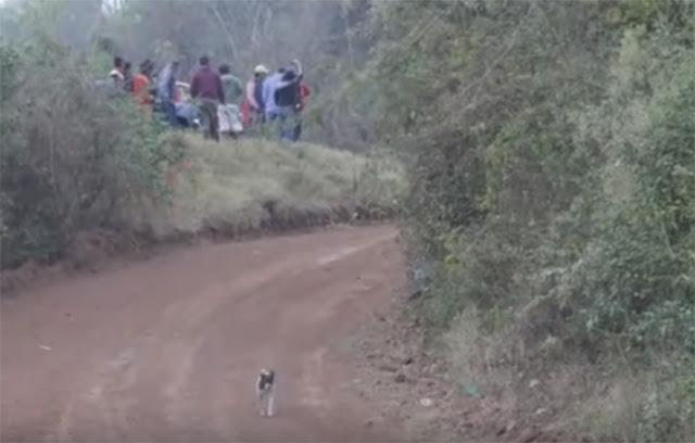Este video te muestra al perro con más suerte en el mundo