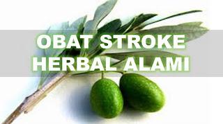 stroke, penyakit stroke, penyebab penyakit stroke, gejala penyakit stroke, obat tradisional stroke, obat stroke, obat herbal stroke