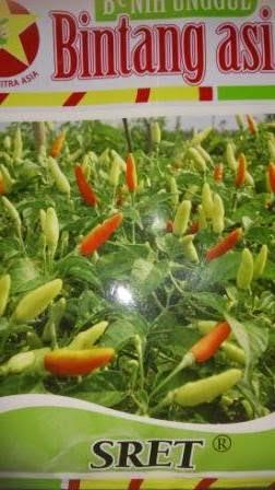 benih petani,tahan virus, buah lebat, Bintang Citra Asia, BCA, Cabai Sret, Cabai Rawit Sret, Cabai kecil Sret, tahan layu, tahan cekaman calcium