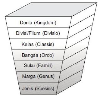 Sistem Klasifikasi Makhluk Hidup 5 Kingdom
