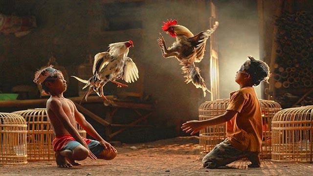 Alasan Kenapa Harus Bermain Judi Sabung Ayam