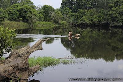Wisata Hutan Desa BuluhCina Kampar