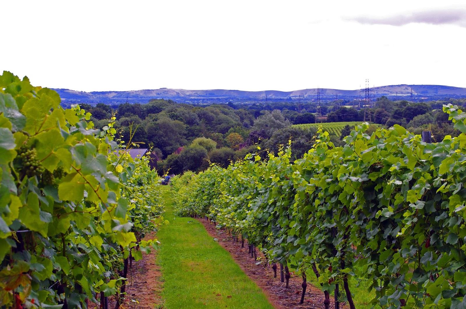 Bolney Wine Estate Grand Gourmet Tour