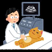 エコー検査のイラスト(猫)