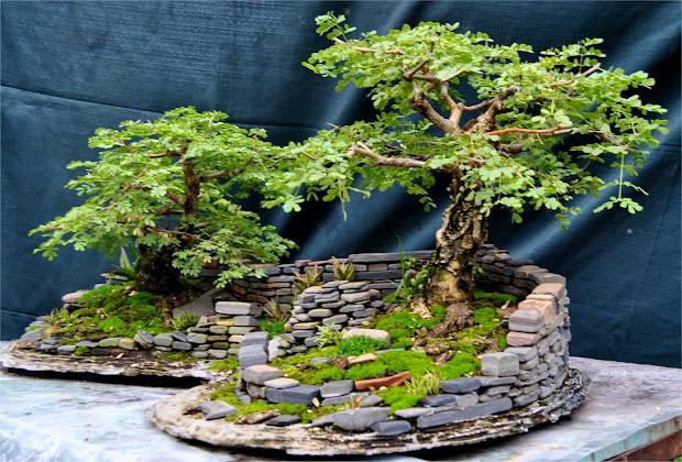 lennard's bonsai beginnings. landscape