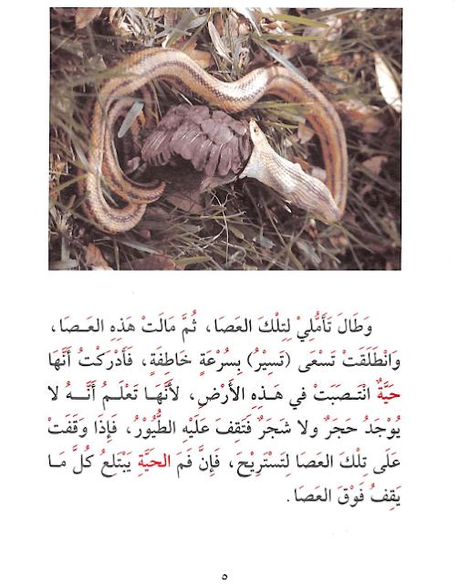 قصة الحية كيف تصيد العصافير للاطفال