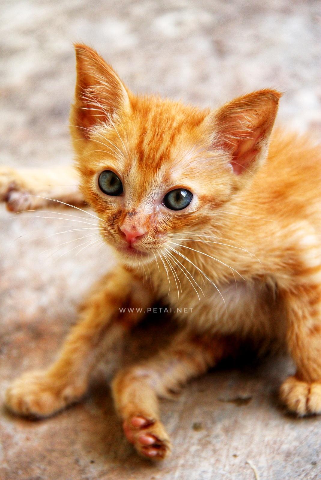 Mengenang Kucing Kesayangan Kami Oyen 2