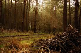 hutan Wychwood salah satu hutan paling angker dan menyeramkan