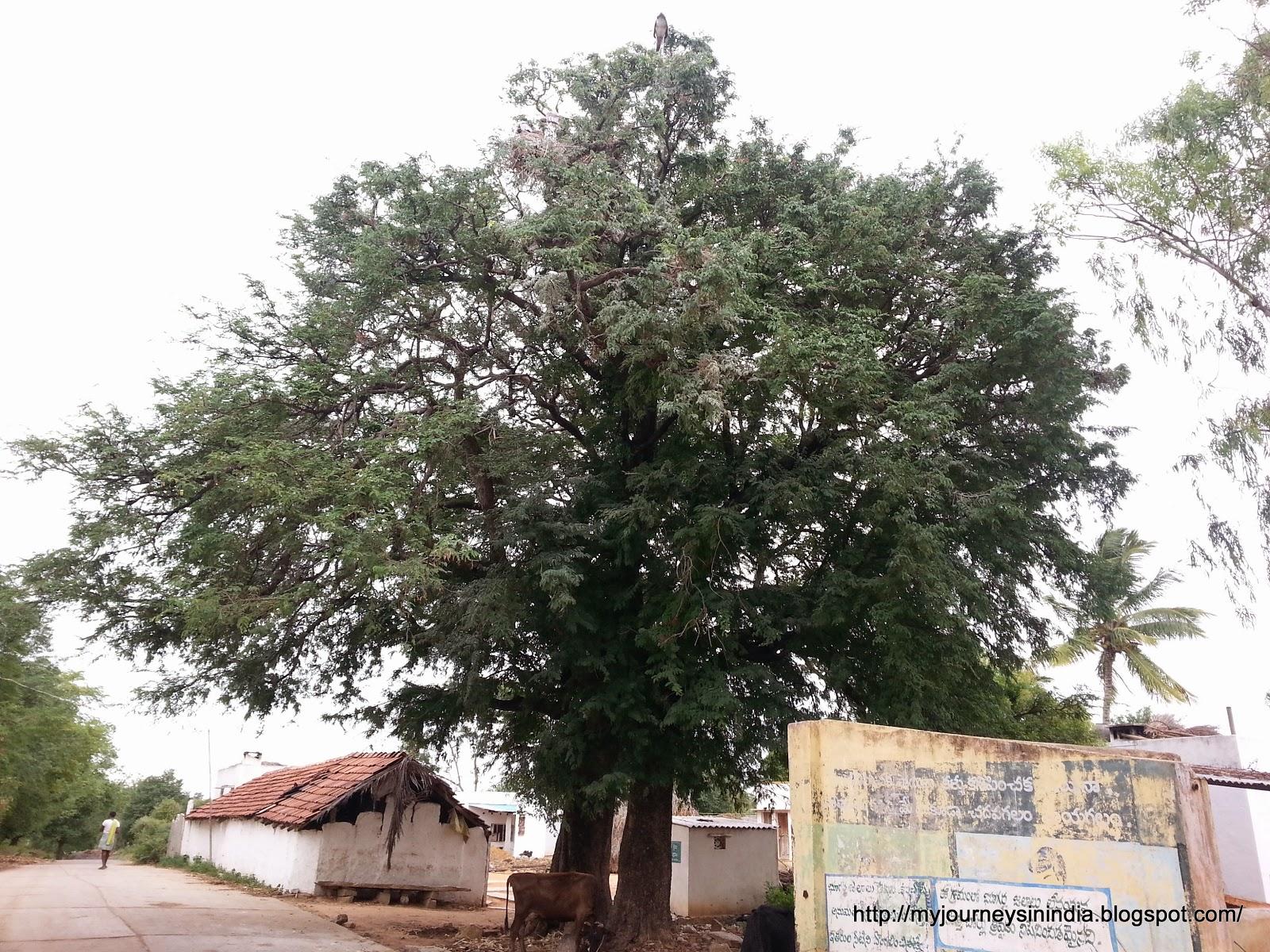 Veerapuram