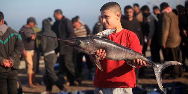 الأسماك-المصرية-المهربة-تغزو-أسواق-قطاع-غزة-كالتشر-عربية