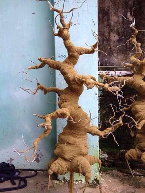 Goc bonsai mai dao the truc tai Dang Tran Con