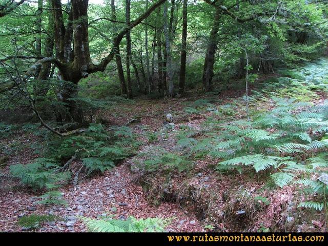 Ruta Bosques de Moal: Saliendo del bosque