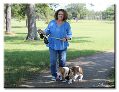 Walking with Bentley the Basset Hound