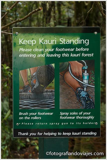 precauciones para visitar bosque de kauris