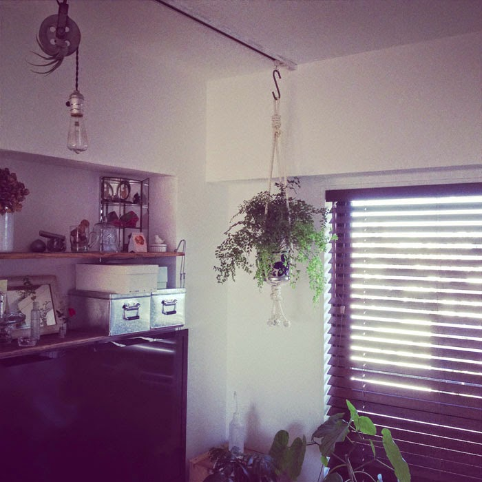 リノベーションマンションのリビングにロープで吊り下げた観葉植物アジアンタム