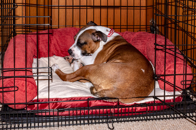 Photo of Ruby fast asleep in her bed