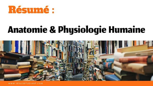 Résumé : Anatomie et Physiologie Humaine