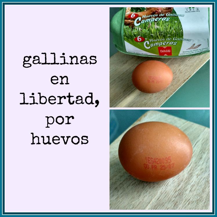 gallinas-en-libertad-por-huevos