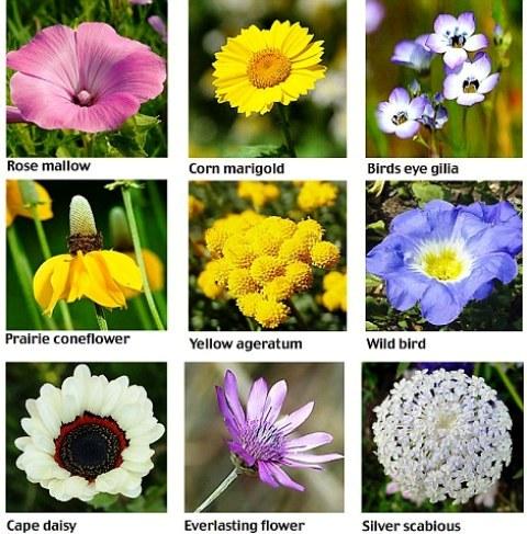 Flower Name List