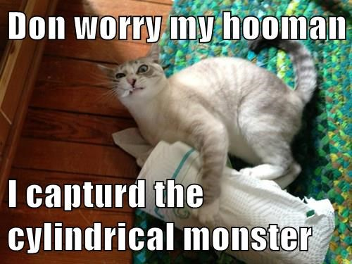 I Captured The Cylindrical Monster, funny cat meme