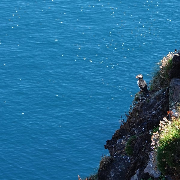 écosse north coast 500 road trip côte ouest rando handa island puffin