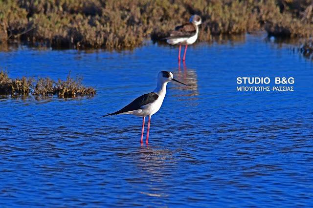 Παγκόσμια Ημέρα Νερού: Αφιερωμένη στην καλή λειτουργία των λιμνών και των υγροβιοτόπων
