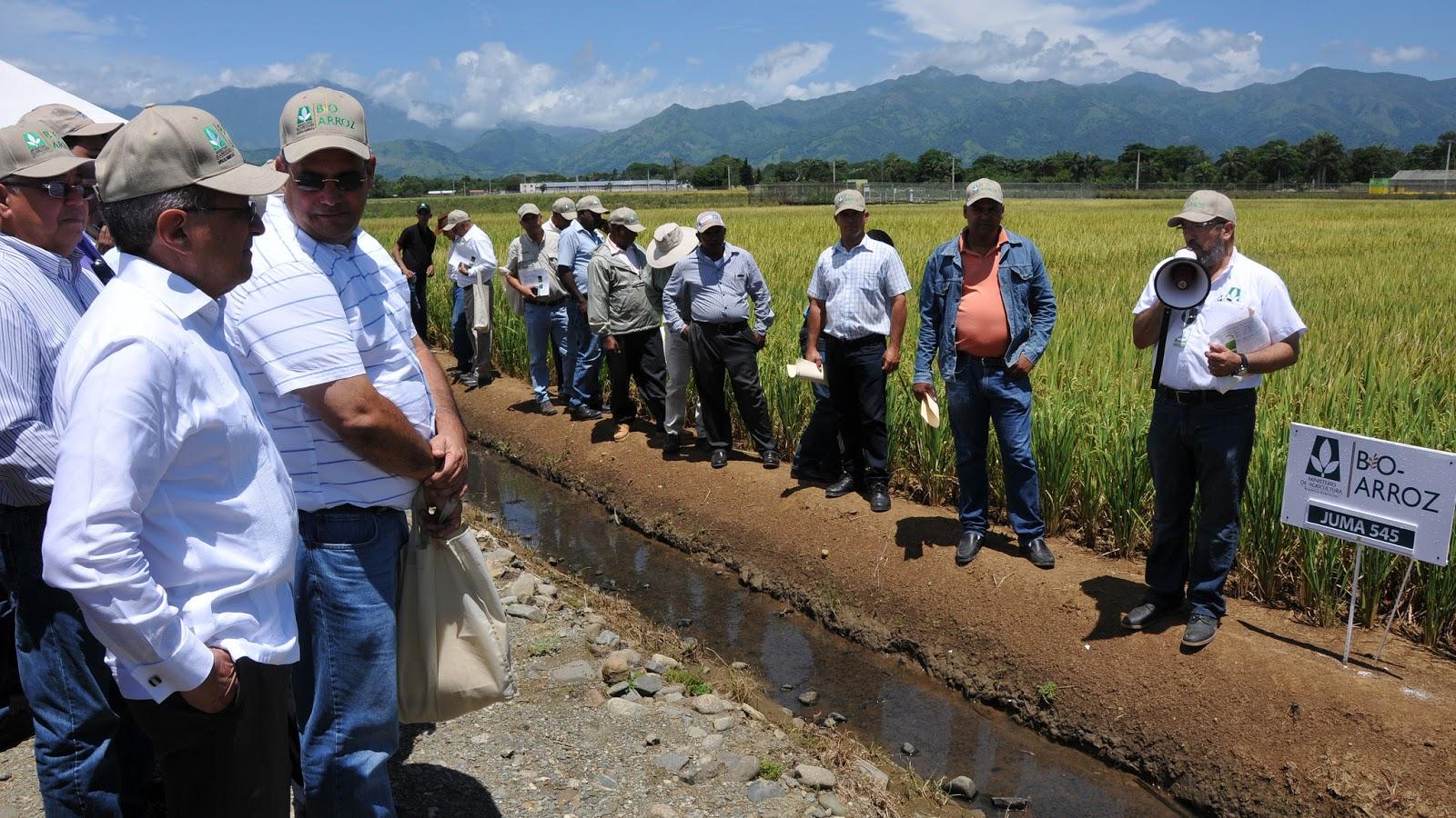 Agricultura anuncia mejoramiento genético del arroz dominicano