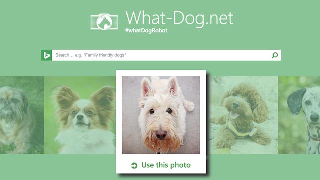 What Dog, un site qui permet de connaître la race d'un chien à partir d'une photo