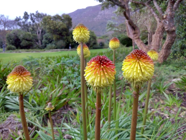 Jardín Botánico Kirstenbosch en Ciudad del Cabo