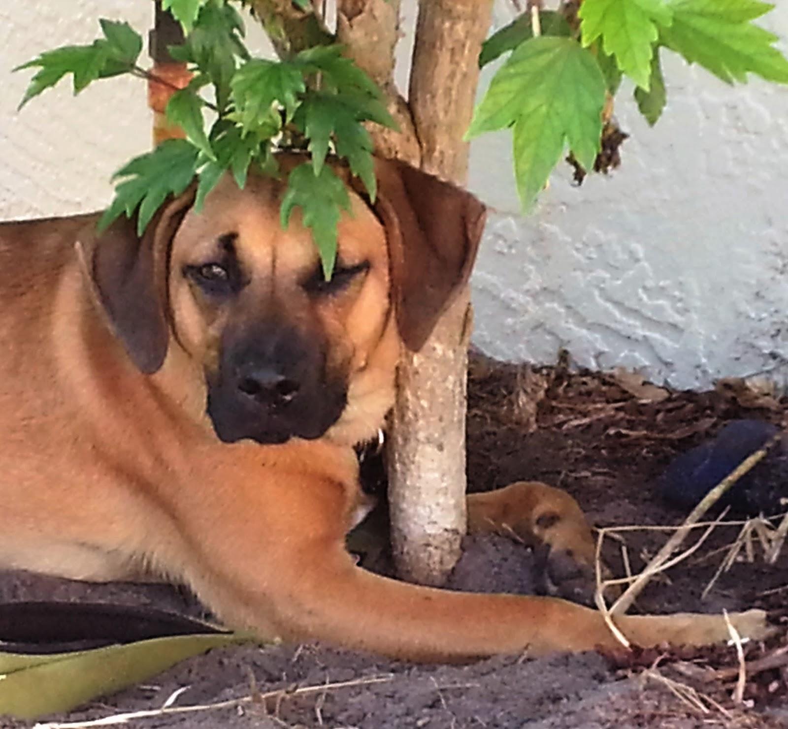 Florida, Warmth And Water: Happy Lawn, Happy Dog, Happy Life
