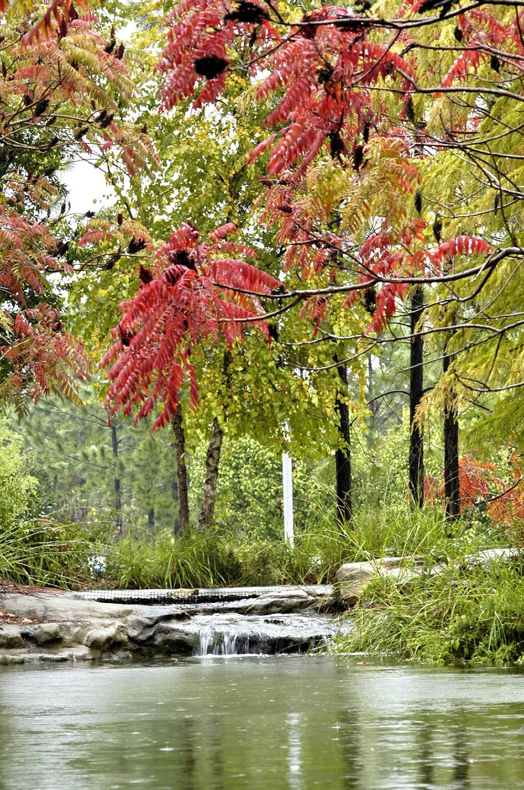 City of Athens Texas Tourism: Scenic Fall Foliage Driving Trail
