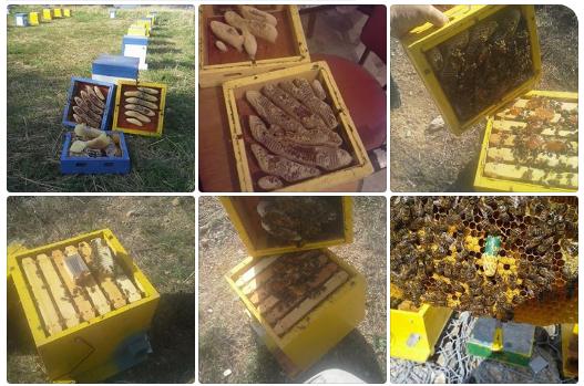 Πωλούνται κυψελίδια στην Κρήτη photos