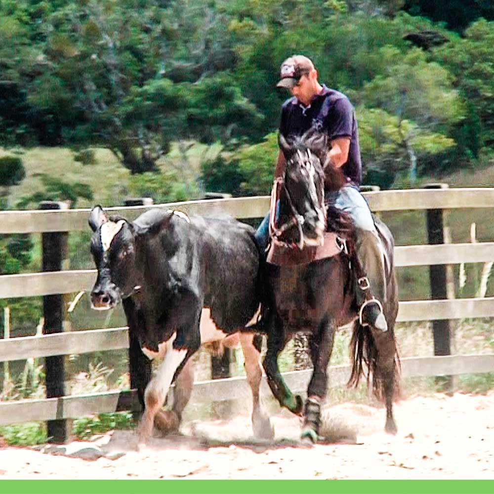 Fotos De Cavalos De Vaquejada Com Frases Reflexão Da