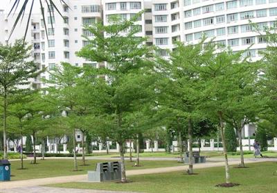 Jasa Tukang Taman Surabaya Taman Depan Rumah