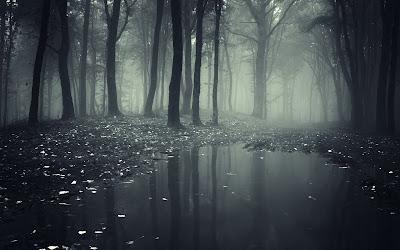 Bosque de negro con un pequeño lago y niebla